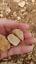 Jerusalem-Rocks-Stone-Israel-Gift-from-Jerusalem-Gifts-Holy-Land-Gifts thumbnail 3