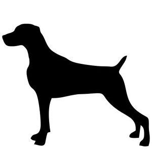 Weimaraner Service Dog