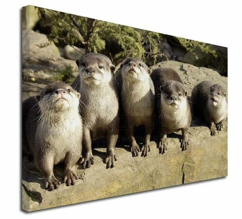 "Cute Otters 30/""x20/"" Wall Art Canvas AO-6-C3020 Extra Large Picture Print Decor"
