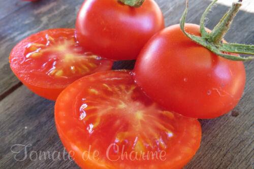 "Lot /"" PRECOCE /"" 6 variétés de tomate productive savoureuse résistante méth.bio"