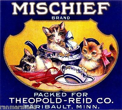 Faribault Mischief Kittens Cats Kitten Cat Orange Citrus Fruit Crate Label Print