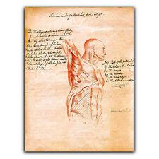 Letrero de metal placa de pared humana los músculos del torso Vintage Impresión cirugía/quiropráctico Dr
