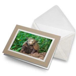 Greetings-Card-Biege-Six-Banded-Yellow-Armadillo-Brazil-16050
