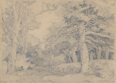 Ness J.a Early 20th Century Graphite Drawing Tree Study