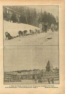 Chiens-Sanitaires-Husky-Dogs-of-Alaska-Transport-Vosges-WWI-1916-ILLUSTRATION