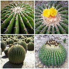 10 semi  di Echinocactus ingens ,seeds cactus