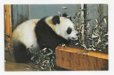 WASHINGTON D. C. HSING HSING GIANT PANDA NATIONAL ZOO PARK Post Card #2060