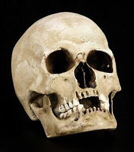 Skull-Replica-Woman-Sagus-With-Lower-Jaw-Figurine-Mensch-Skull-Anatomy