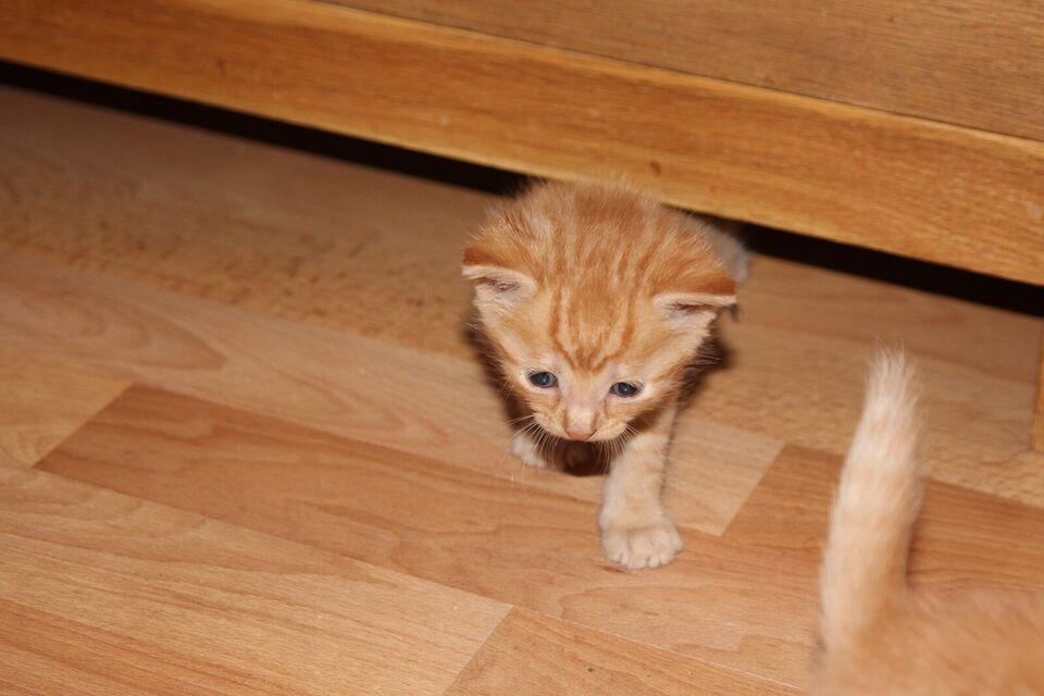 kattekillinger til salg