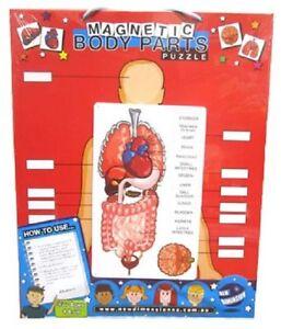 Magnetic-Body-Parts-Chart-Teacher-Resource-Homeschool-Primary-School-Kids