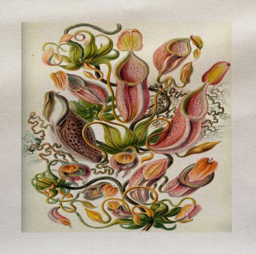 Planta Vintage Panel De Tela Impresa hacer un Cojín De Tapicería Craft