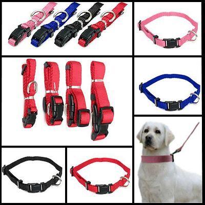 Halsband Hundehalsband  Halsbänder Halsung Nylonhalsband mit Sicherung Farbig