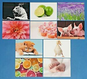Set-of-10-NEW-Mixed-Postcards-great-for-Postcrossing-amp-Postcardsofkindness-set-3
