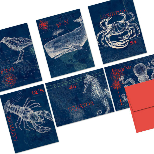 Red Envs 24 Note Cards Pier 45 Octopus
