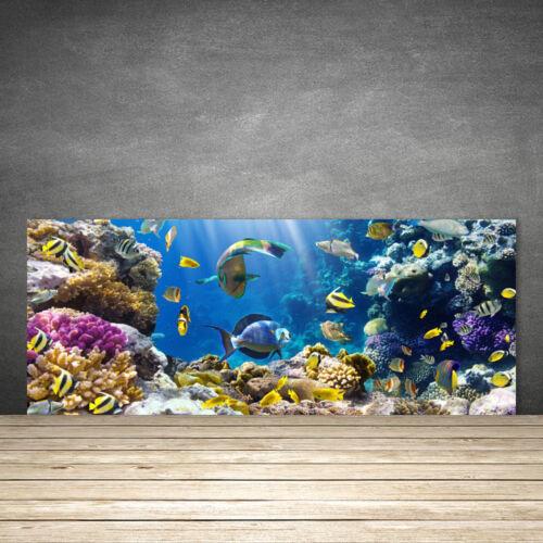 Fond de panier de cuisine en verre ESG anti-projections 125x50cm Récif de Corail Nature