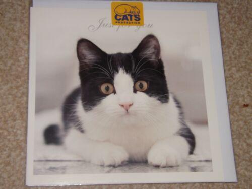 "Stunning /""  CUTE BLACK//WHITE KITTEN /""....BLANK SEALED Card see photo"