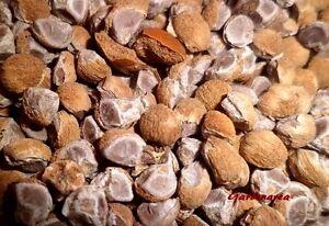 50-Graines-Bio-Hawaiian-Baby-Woodrose-039-Argyreia-nervosa-039-Organic-seeds
