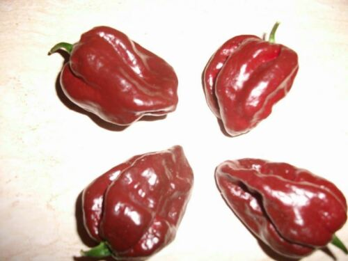 25 Fresh Heirloom Caribbean Chocolate Habanero Hot Pepper Seeds-C 054