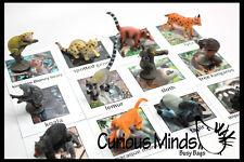Montessori Rainforest Animal Match -Miniature Animals Matching 2 Part Cards