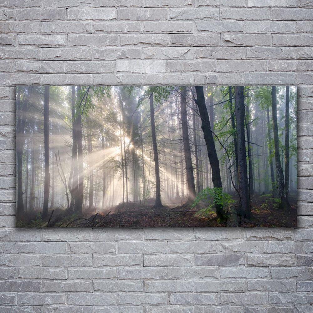 Photo sur toile Tableau Image Impression 120x60 Nature Forêt