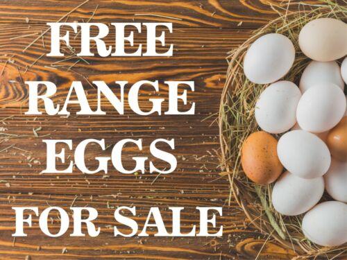 Free Range oeufs pour la vente en Métal Aluminium Plaque Cottage Vintage signe 20x15cm