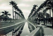 1923 Vintage DOUBLEWEIGHT Photo palm trees line Avenida Do mangue Rio De Janeiro