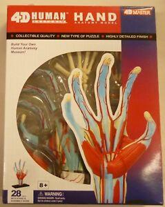4D-Master-Human-Hand-Anatomy-Puzzle-Educational-Kit
