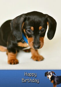 Image Is Loading Dachshund Sausage Dog Birthday Card Free Delivery