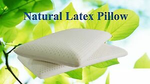 All Natural Latex Pillow  with Organic Cotton Cover|Standard  SIZES