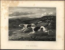 Fox Hounds Dogs image c 1820 fine antique engraved print