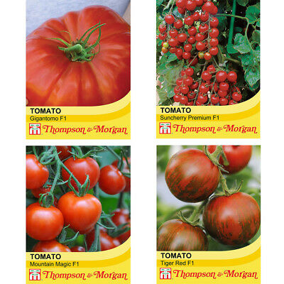 SEEDS FRUIT T/&M TOMATO MONEYMAKER SEED RRP £2.29