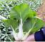 Organic-Garden-Vegetable-Seeds-NON-GMO-Heirloom-Seed-79-Varieties-NON-Hybrid thumbnail 31