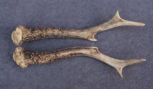 Lot de chevreuil bois (Horn- Cornes- cabine- couteau- Carving- chasse- taxidermie)-afficher le titre d`origine opXNM1jA-07160459-916958633