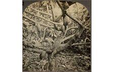 TROPICAL TREE LANDSCAPE COCOA POD STEREOVIEW