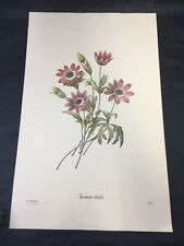 REDOUTE Botanical CORN LILY Flower VINTAGE Art Print #63 NOT A COLOR COPY!