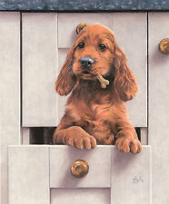 "IRISH RED SETTER GUN DOG FINE ART LIMITED EDITION PRINT  ""Luck of the Drawer"""
