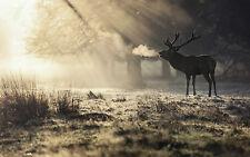 GRANDE stampa incorniciata-GRANDE Cervo su un freddo mattino & gelida (foto di origine animale ART)