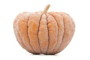 Pumpkin CHIRIMEN- Pumpkin Seeds-VERY TASTY JAPANESE GEM-15 FRESH SEEDS