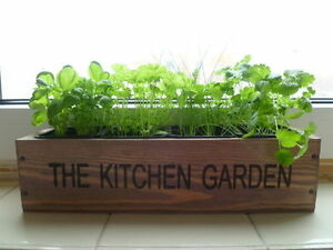 Herb Kitchen Garden Kit Indoor Windowsill Balcony Box Wooden Pots ...