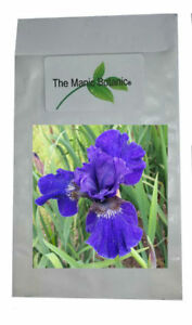 Iris-sibirica-x-Prussian-Blue-Siberian-Iris-X-15-SEEDS-Fresh-2018
