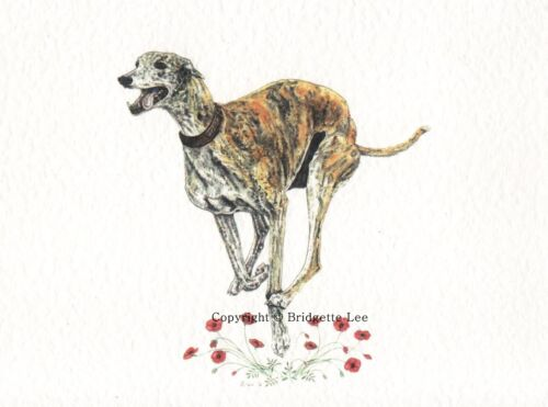 Whippet greyhound Dog  Watercolor//ink  painting Dogs By Bridgette Lee