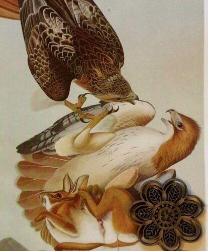 "Vtg 1974 Audubon Bird Art Print Color Litho Wide Margin 9/"" x 12/"" *** SEE VARIETY"