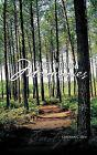 Piney Woods Memories by Carolyn C Dew (Paperback, 2011)