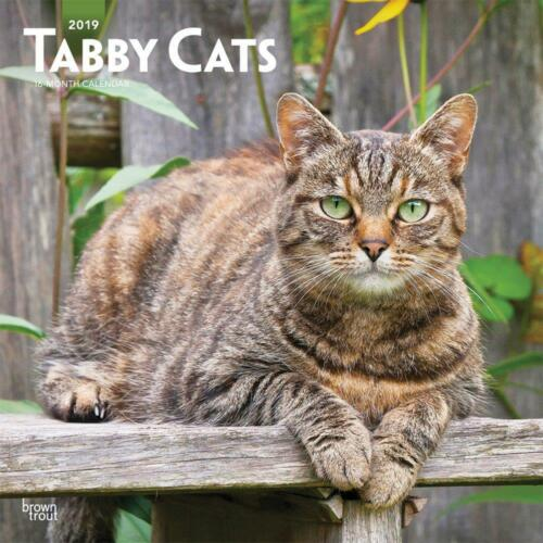 TABBY CATS CALENDAR 2019 UK SQUARE 30cm x 30cm WALL NEW /& SEALED