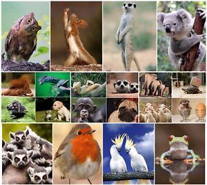 LUSTIGE-TIERE-Set-4-20-er-Tierpostkarten-Set-20-verschiedene-Ansichtskarten