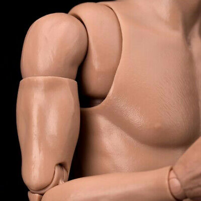 1//6 Scale Narrow Shoulder Male Figure Body STRONG DURABLE WorldBox SHIP FROM USA
