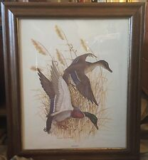 Charles E. Murphy Mallard Duck / Framed Art Print Nature