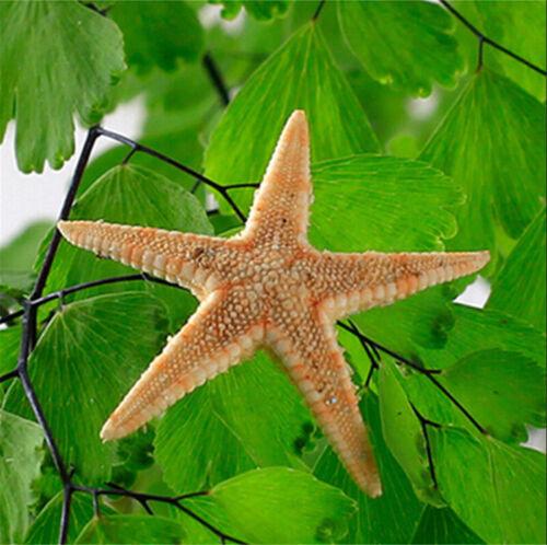 20~200PCS Cute Small Mini Starfish Sea Star Shell Beach Deco Craft DIY Making