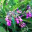 100-pieces-de-graines-bio-Consoude-Bonsai-plantes-jardin-Paquet-Livraison-gratuite-2019-nouveau miniature 1