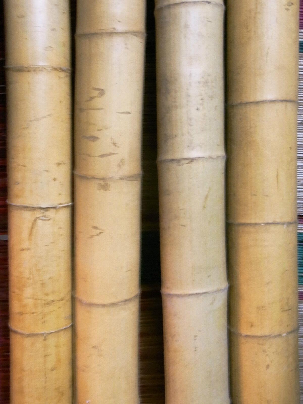 Bambusrohr Bambusstange Bambushalm Bambus Riesenbambus 5 x 11-12 cm x 2 m